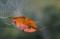 京都新聞写真コンテスト 小さな秋見つけた
