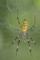 京都新聞写真コンテスト 蜘蛛の巣