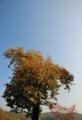 京都新聞写真コンテスト 秋色の季節