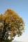 京都新聞写真コンテスト 実りの秋