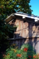 京都新聞写真コンテスト 朝の光
