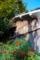 京都新聞写真コンテスト 秋の色彩