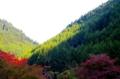 京都新聞写真コンテスト 秋光
