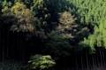 京都新聞写真コンテスト 秋の北山