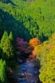 京都新聞写真コンテスト 秋の彩り