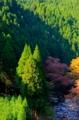 京都新聞写真コンテスト山峡の秋