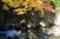 京都新聞写真コンテスト 渓流の彩り