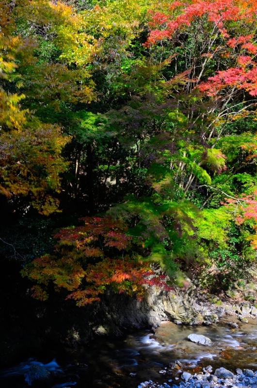 京都新聞写真コンテスト 秋風