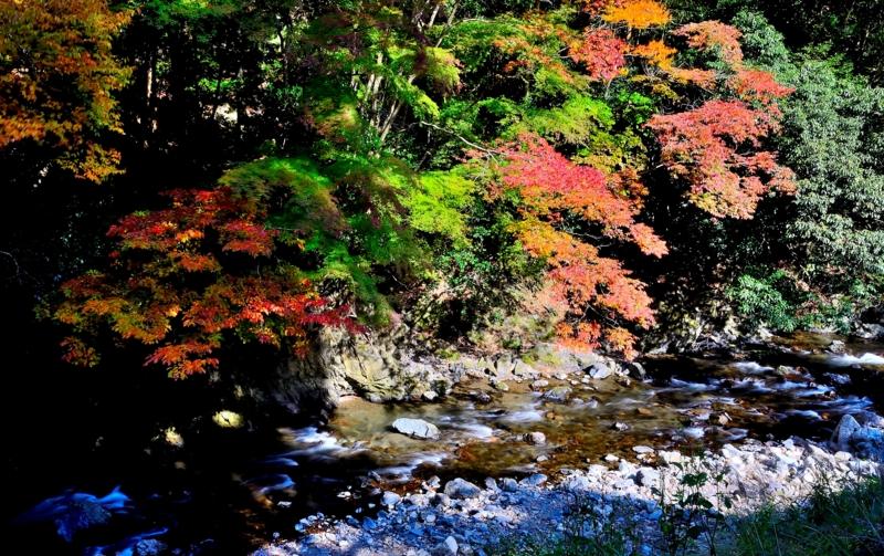 京都新聞写真コンテスト 錦秋