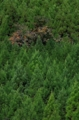 京都新聞写真コンテスト 秋の山林