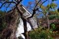京都新聞写真コンテスト 廃墟の秋