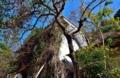京都新聞写真コンテスト 廃墟