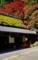 京都新聞写真コンテスト 秋の茶店
