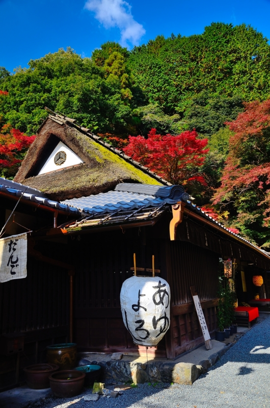 京都新聞写真コンテスト 秋の古都