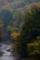 京都新聞写真コンテスト 渓流の秋