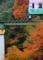 京都新聞写真コンテスト 紅葉を走る