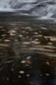 京都新聞写真コンテスト 落ち葉の舞い