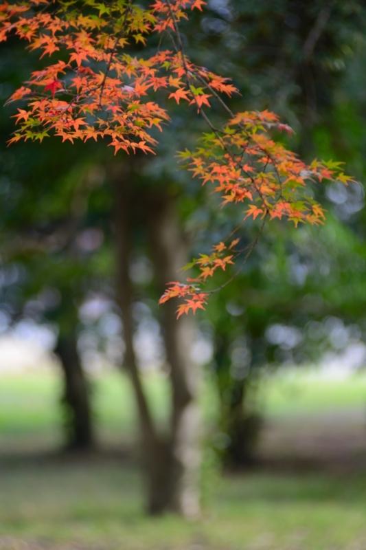 京都新聞写真コンテスト 色ずく紅葉
