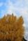 京都新聞写真コンテスト 古都の秋