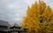 京都新聞写真コンテスト 黄金色の西本願寺