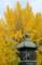 京都新聞写真コンテスト 秋の風情