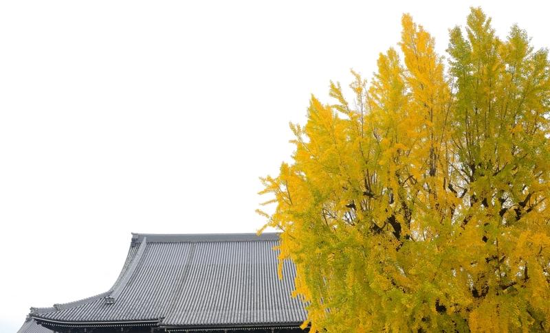 京都新聞写真コンテスト 秋景色