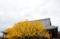 京都新聞写真コンテスト 秋色に染まる