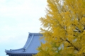 京都新聞写真コンテスト 秋の銀杏