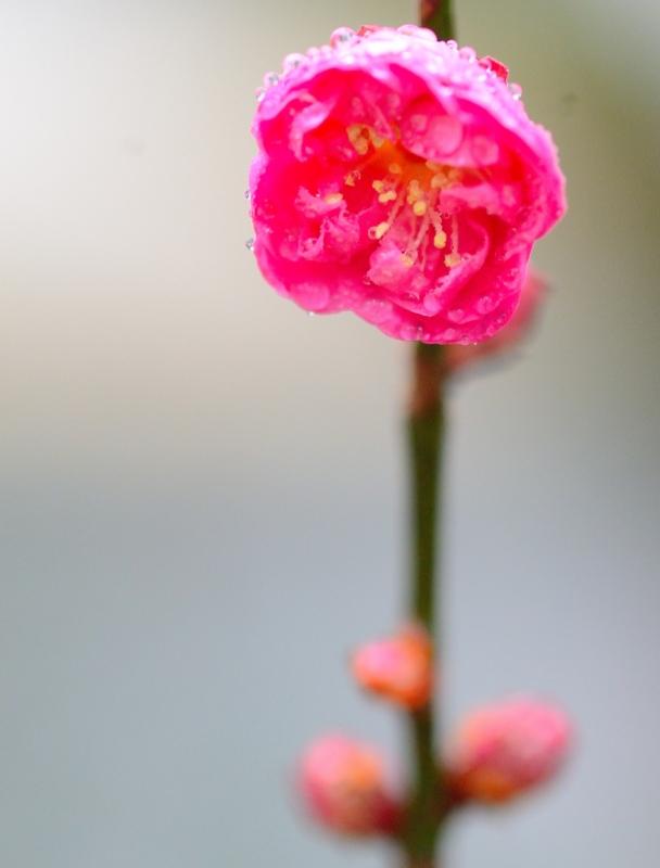 京都新聞写真コンテスト もうすぐ春