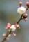 京都新聞写真コンテスト 早春の雨
