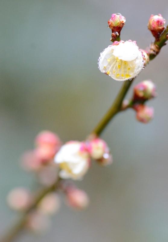 京都新聞写真コンテスト 雨