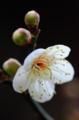 京都新聞写真コンテスト 早春の光