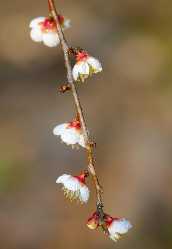 京都新聞写真コンテスト 朝の日差し