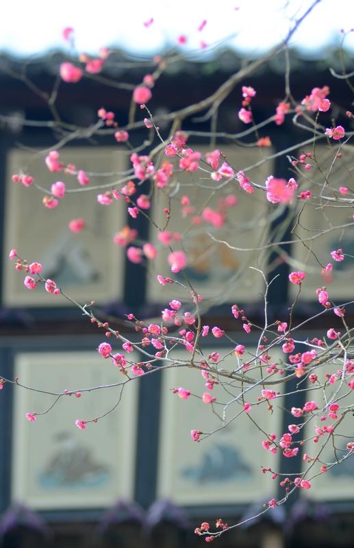 京都新聞写真コンテスト 春近く