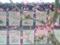 京都新聞写真コンテスト 春を待つ