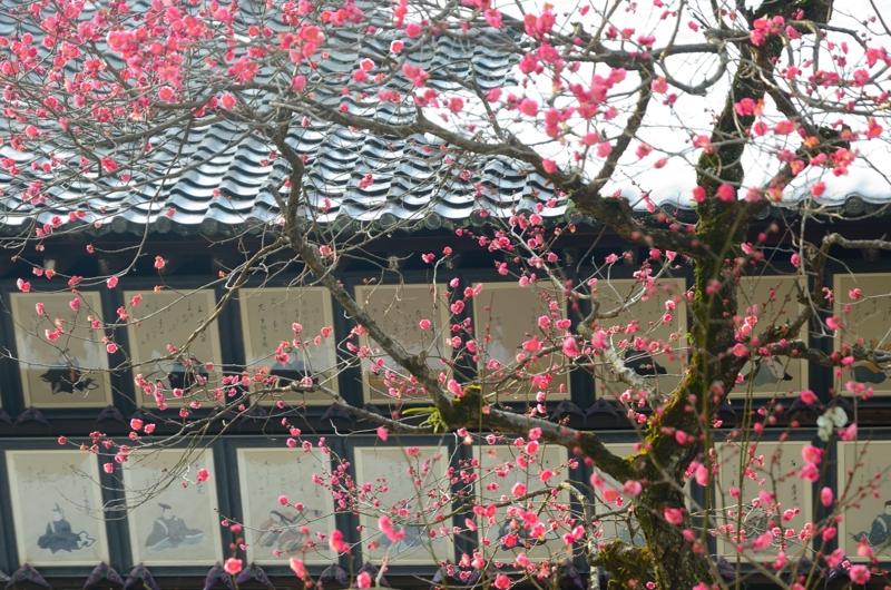 京都新聞写真コンテスト 春近し