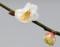 京都新聞写真コンテスト 雨にうたれて