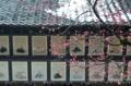 京都新聞写真コンテスト 早春