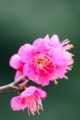 京都新聞写真コンテスト 早春の彩り
