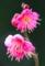 京都新聞写真コンテスト 鮮やに咲く