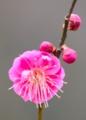 京都新聞写真コンテスト 早春の色