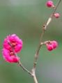 京都新聞写真コンテスト 早春の花