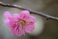 京都新聞写真コンテスト 早春の香り