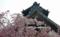 京都新聞写真コンテスト 春ほころぶ