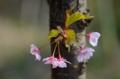 京都新聞写真コンテスト はんなり春色