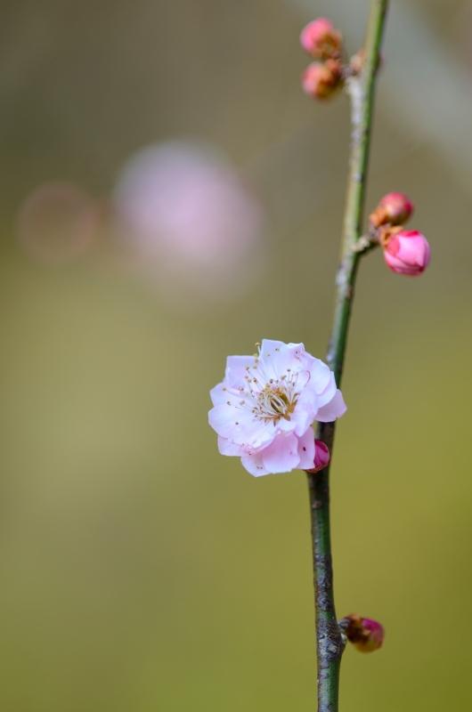 京都新聞写真コンテスト 早春の聲