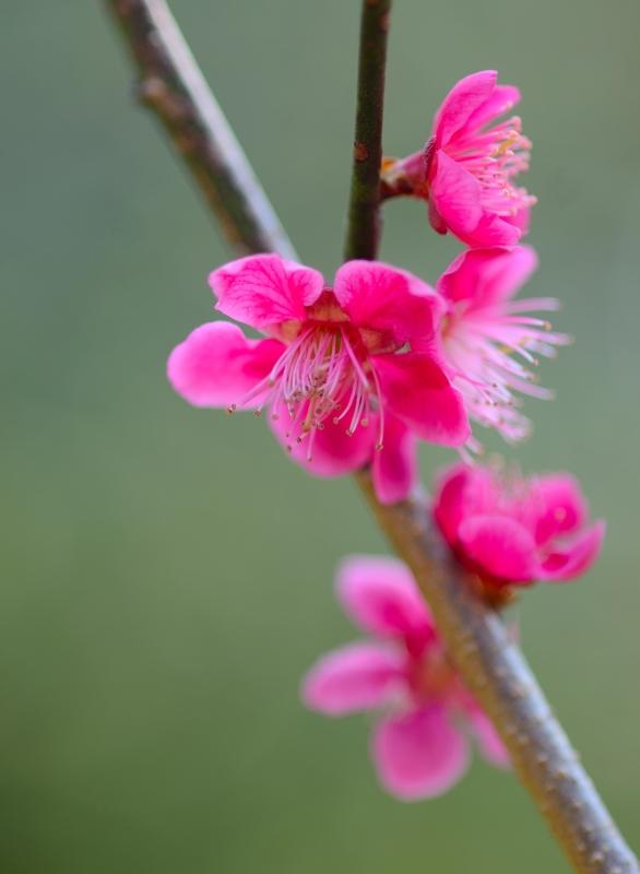 京都新聞写真コンテスト 早春の朝