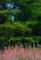 京都新聞写真コンテスト 鮮やか早春