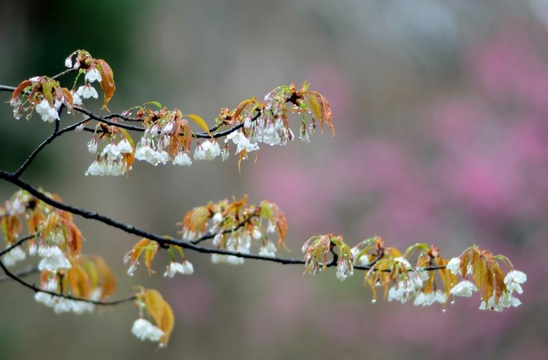 京都新聞写真コンテスト 雨あがり