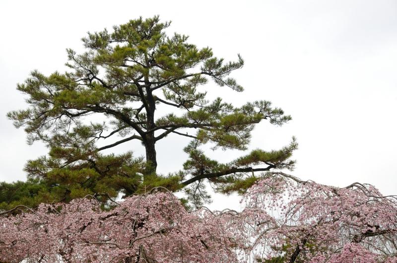 京都新聞写真コンテスト 春の彩り